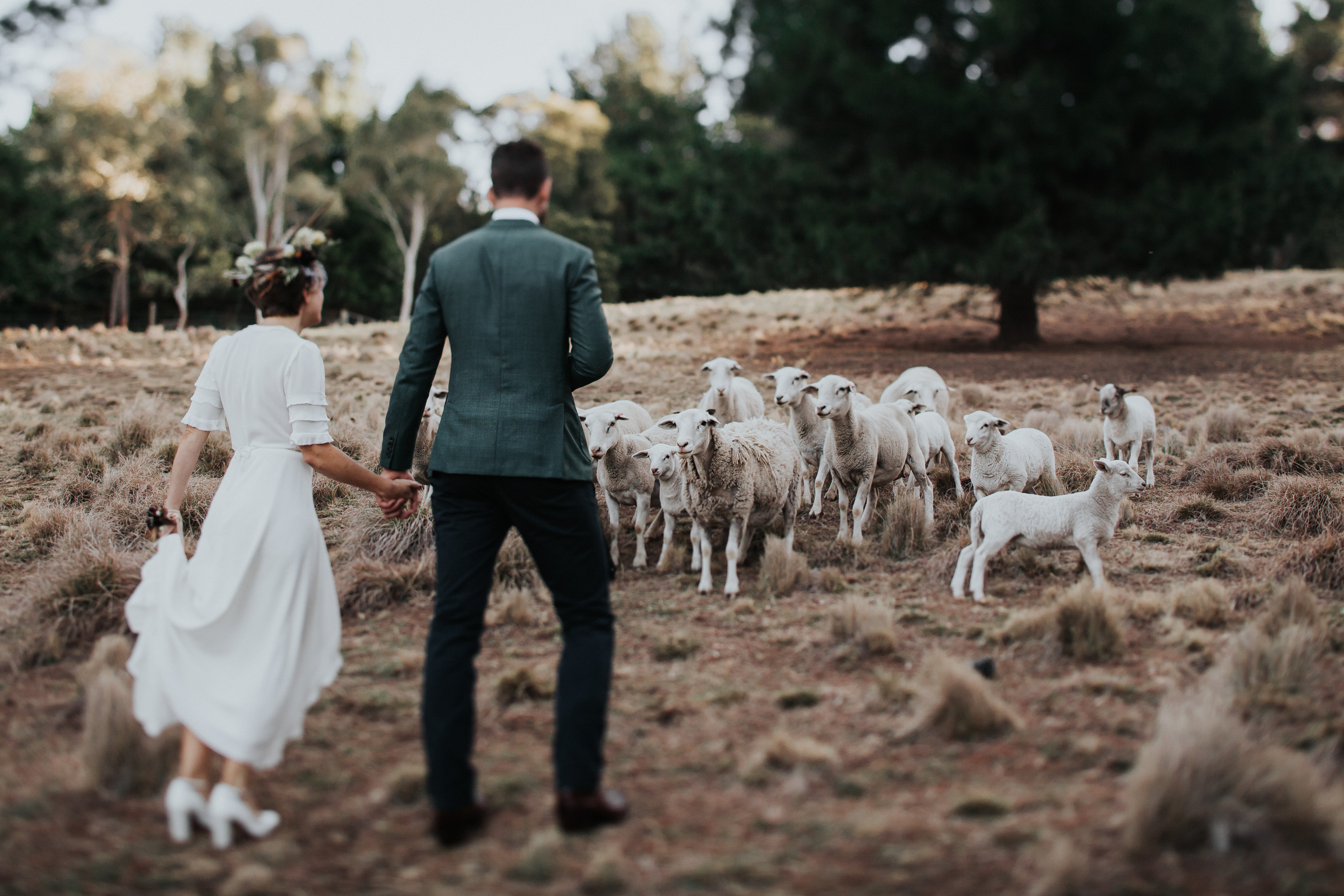 Bride and groom with sheep in tilt shift
