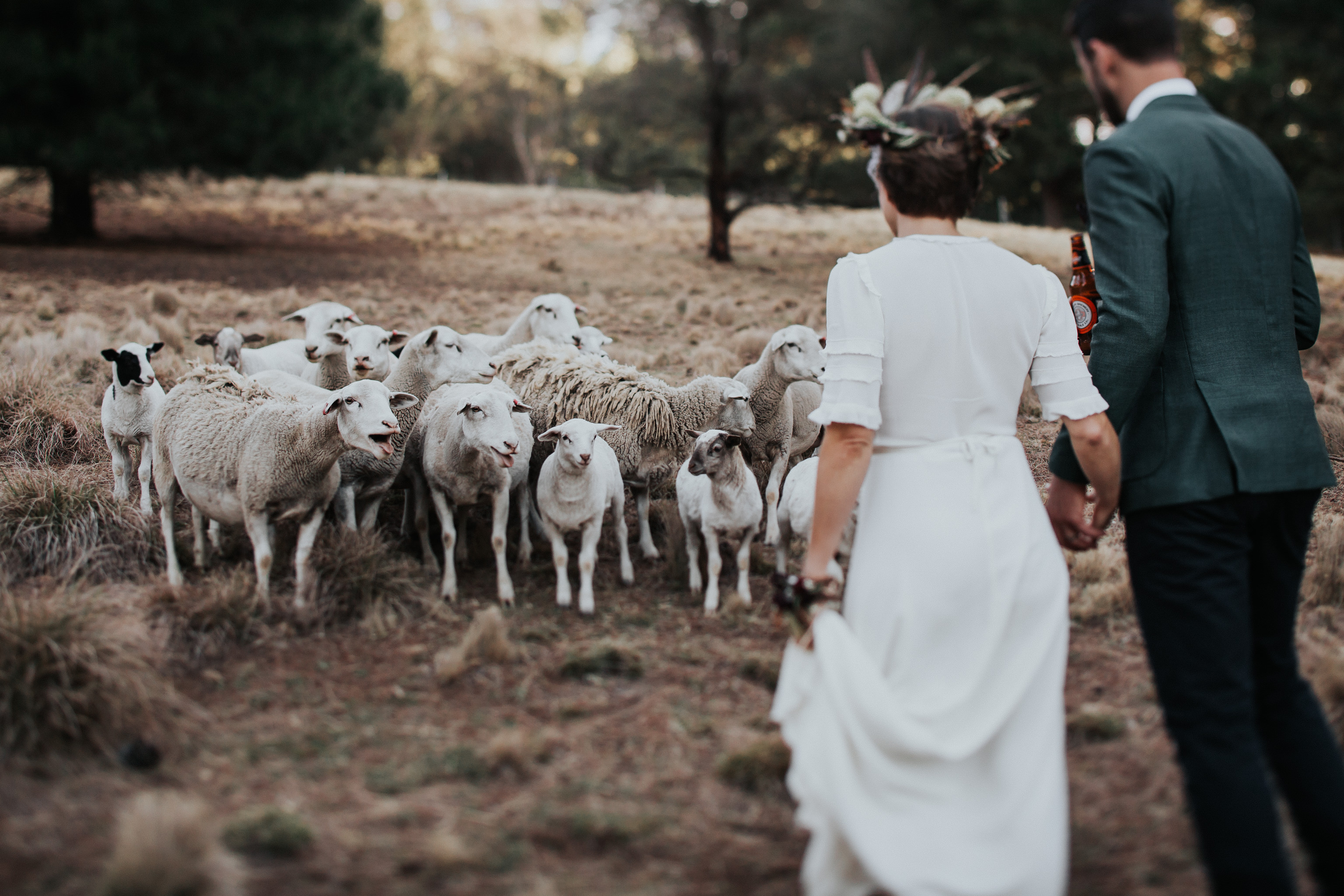 Bride and groom with sheep tilt shift